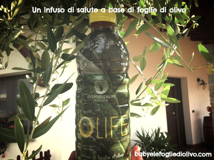 infuso di foglie di olivo rai 1